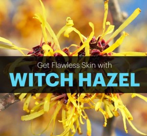 Witch Hazel Uses for Quality